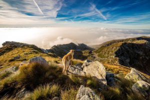 Chien, Montagne, Mombarone, Nuages, Paysage, Andrate